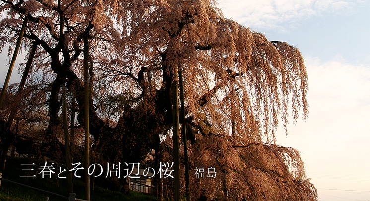 日本を代表する枝垂桜、三春滝桜 三春町は、福島県のほぼ中央に位置し、桜... 三春とその周辺の桜