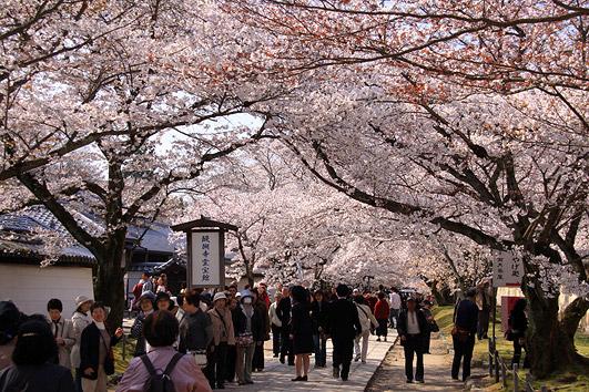 醍醐寺 に対する画像結果